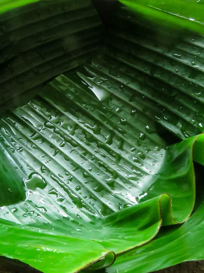 cover the cooking pan in banana leaf to make the sri lankan sour fish.